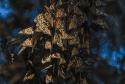 NIKON D500_03
