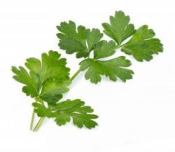 Véritable Lingot Parsley Bio substrát (petržele)