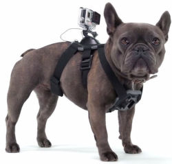 GOPRO Fetch Dog Mount - psí postroj na kameru