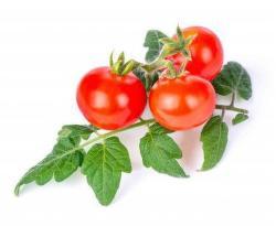 Véritable Lingot Mini Red Tomato substrát (cherry rajčata)