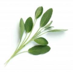 Véritable Lingot Sage Bio substrát (šalvěj)