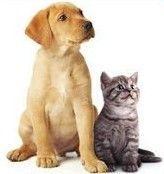 Vysavače do domácnosti se zvířátky