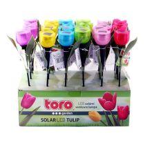Toro tulipán